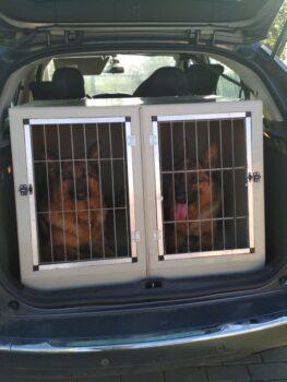 bezpečné cestování s našimi psy
